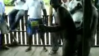Sex in public in an African country with busty chick and man with small dick